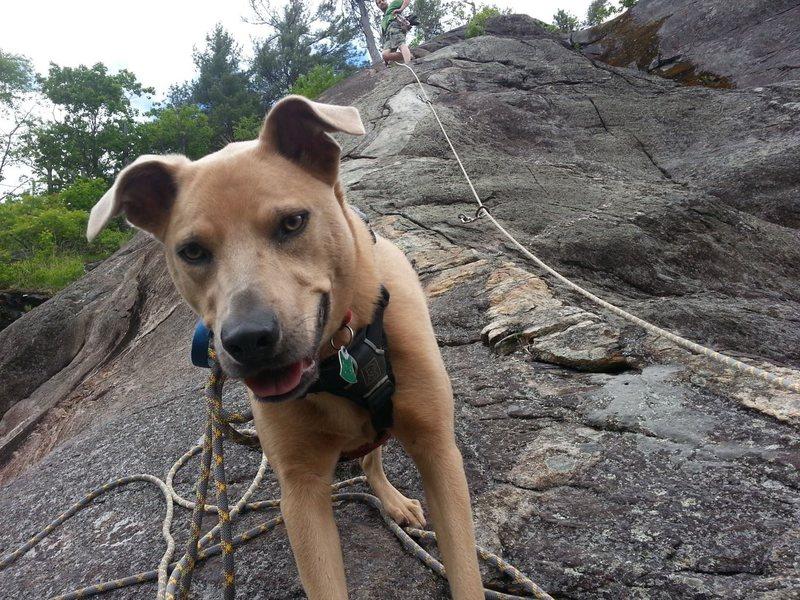 Shyla, roped in doing a Doggie Ascent of Clip-a-dee-doo-da