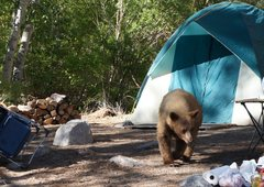 Rock Climbing Photo: We camped at the pullout near the creek across fro...