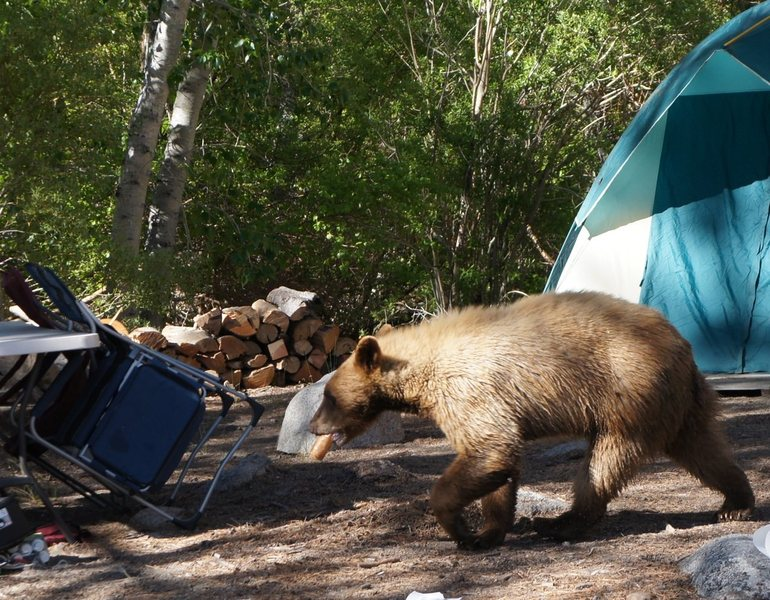 the bear grabbed some food, and ran away across the river.