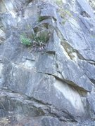 Rock Climbing Photo: The route follows the well featured arete.