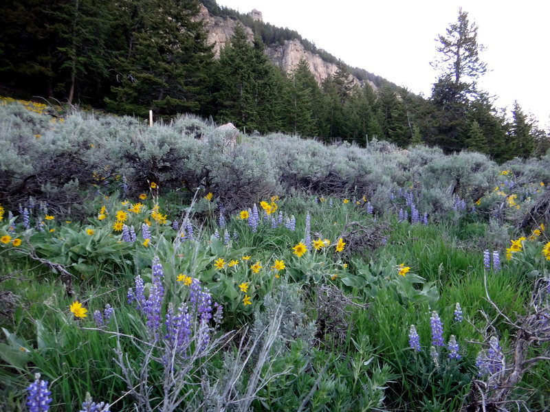 Rock Climbing Photo: Wild Flowers in full bloom