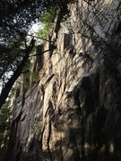 Rock Climbing Photo: Gee, I'm a Tree from the right.