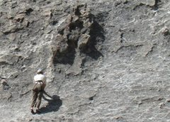 Rock Climbing Photo: Climber approaching a massive tied-off chickenhead...