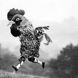 Rock Climbing Photo: chicken suit