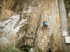 Rock Climbing Photo: Dhivash at the 2nd bolt.