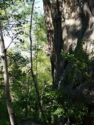Rock Climbing Photo: On Slang through the trees. Beginning of the cruxy...