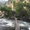 """Tree crossing from the """"other"""" side of the water. SCC is uphill behind the photographer."""