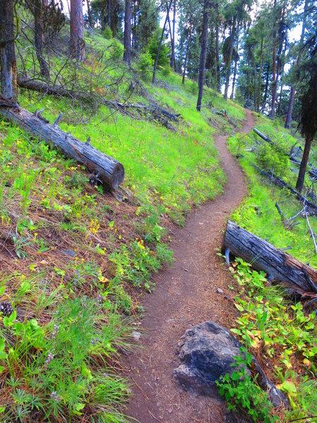 approach trail - Steins Pillar