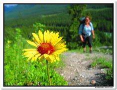 Rock Climbing Photo: Flower Power....