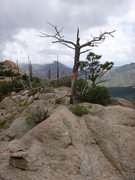 Rock Climbing Photo: Tree on the ridge seen just before turning down th...