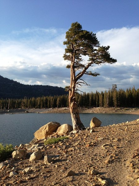A lone tree stands proud on the shoreline of Horseshoe Lake