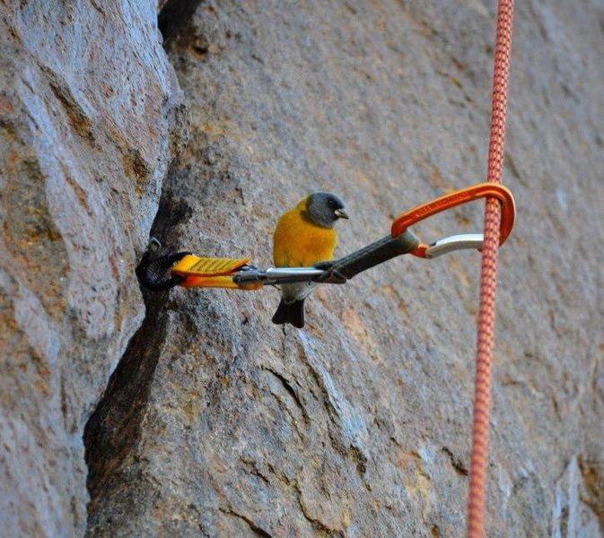 Rock Climbing Photo: A bird posing on a #2