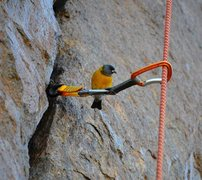 Rock Climbing Photo: A bird posing on a #2