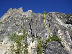 Rock Climbing Photo: Start of the West Ridge. Starts by the two dead tr...