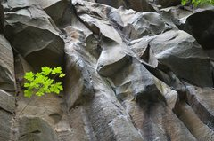 Rock Climbing Photo: The chalked up rail (one of the crux) sections of ...