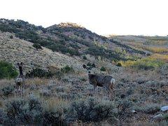 Rock Climbing Photo: Locals near Timber Creek CG, Ely