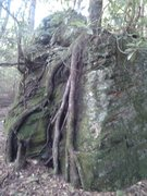 Rock Climbing Photo: This is the boulder you'll pass, after you started...