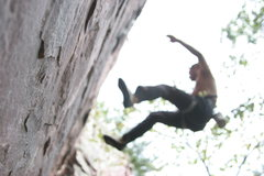 Rock Climbing Photo: devil's lake falling