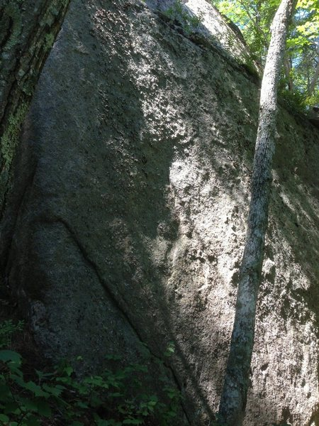 Cape Ann Fingerbang climbs the area roughly in the middle of this photo.  The vertical flake start is just visible in the middle as the small starting foothold just above the flake at the bottom and adjacent to the tree.