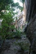 Rock Climbing Photo: Brother's Bond climbs through the brush and starts...