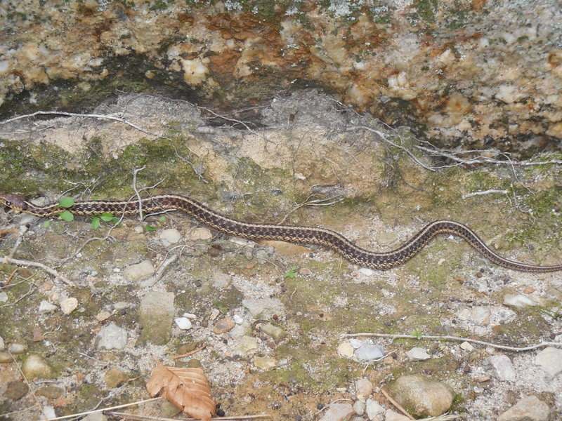 """A young local that was crawling around at the base of """"Maria Direct."""""""