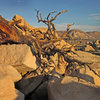 Dead tree out by Dutzi Rock with Saddle Rocks in the background