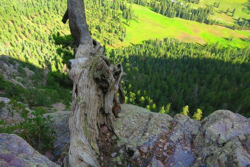 The dead tree on pitch 2 belay ledge.