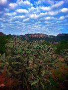 Rock Climbing Photo: Chollas and Clouds. September 2013.