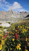 Rock Climbing Photo: Flowers along the trail in Titcomb.