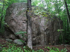 Rock Climbing Photo: 20 foot tall beauty, one of the Sugar Maple Grove ...