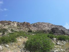 Rock Climbing Photo: The view of the Madison Wall from the cedar tree