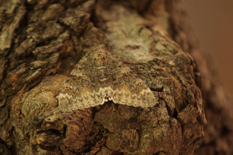 Moth, hanging in the shade.