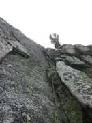 Rock Climbing Photo: Looking up to the tree a top of the 10th pitch acc...