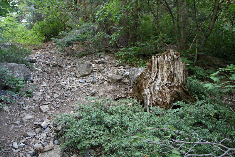 Rock Climbing Photo: The stump in the description after which you turn ...