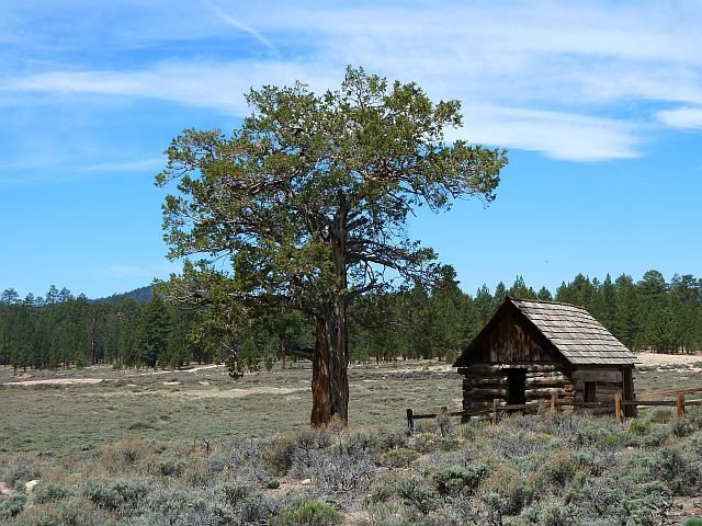 Rock Climbing Photo: Weathered cabin and pines, Holcomb Valley