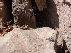 Rock Climbing Photo: Black Widow devours Grasshopper at the Pup Tent.  ...