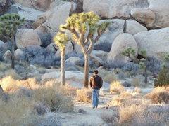 Rock Climbing Photo: Joshua Tree, CA.  'nuff said.  -- photo by Said