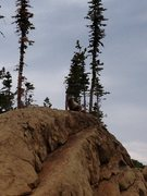 Rock Climbing Photo: Ingall's resident groundhog...we think