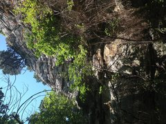 Full view of Skull & Bones. Route follows direct line to huge pine tree, which can be slung as a belay or rap station.