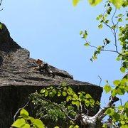 Rock Climbing Photo: Jess high on Dr. Dias