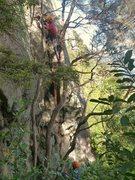 Rock Climbing Photo: Jabba the Hut