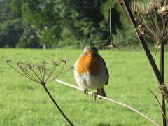 Rock Climbing Photo: Borrowdale Robin