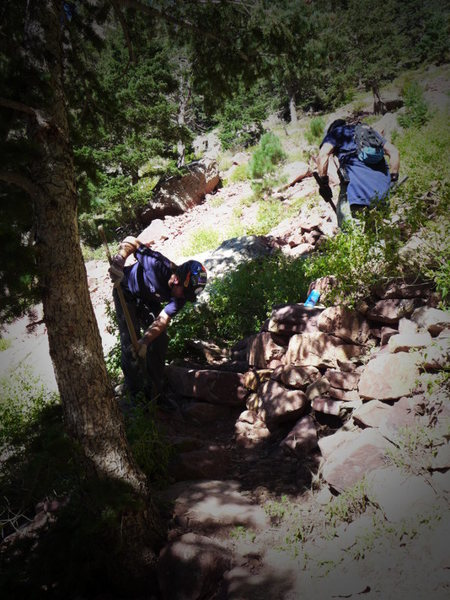 Rock Climbing Photo: Redgarden trail work.