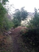 Rock Climbing Photo: New trail.