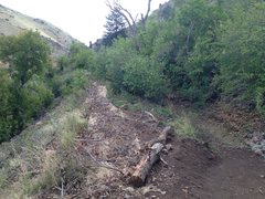 Rock Climbing Photo: New trail and reclaimed old trail.