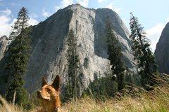 Rock Climbing Photo: Bodhi Takes on Yosemite
