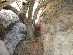 Rock Climbing Photo: The bomber belay tree at the top of what I believe...