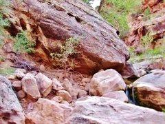 Rock Climbing Photo: Runaround Rock's north face.