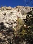 Rock Climbing Photo: Start of the route from the Climber's Access trail...