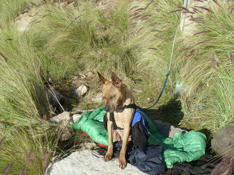 Bruzer on bivy guard at ECM.